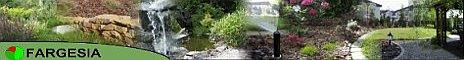 Fargesia-projektowanie i zakładanie ogrodów